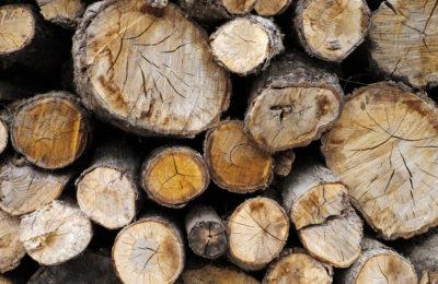 Finansowanie inwestycji w branży drzewnej